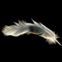LibreHunt: All Distros